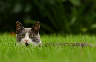 """""""Feral cat"""" by Jeff Oien used under CC BY 2.0."""